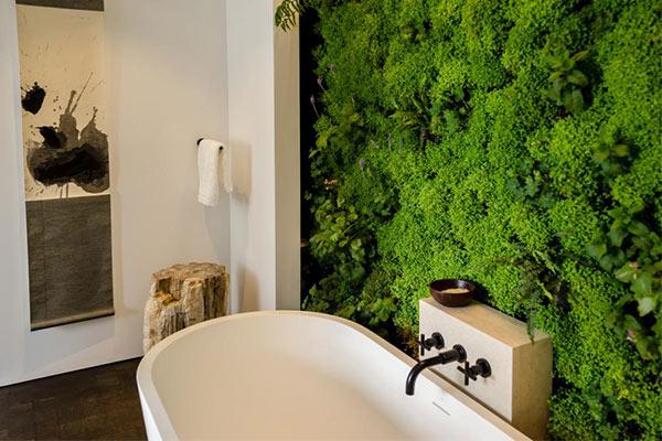 گیاهان مناسب دسته بهداشتی و حمام