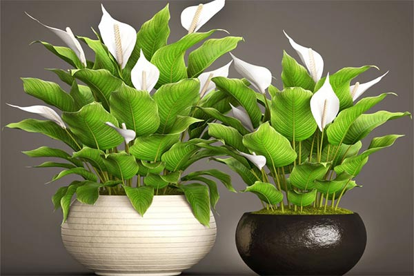 ۲۰ نمونه از گیاهان مناسب دسته بهداشتی و حمام