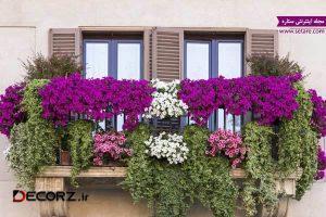 عکس  ایجاد باغ در خانه با گیاهان بالا رونده
