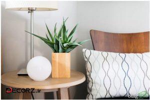 7گیاه مناسب اتاق خواب برای افزایش اکسیژن محیط با مراقبت کم