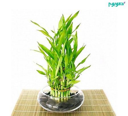 گیاهان آپارتمانی، متفاوت و زیبا