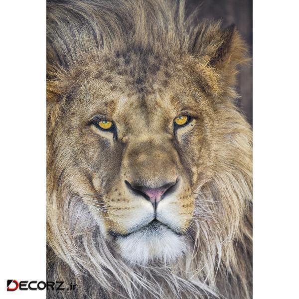 پوستر دیواری کومار مدل Lion 1-619